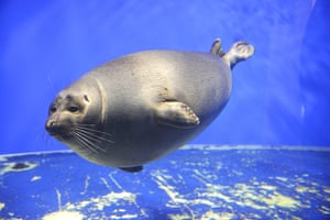 Biodiversity 100: Baikal Seal at the Baikal Ecology Museum
