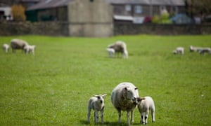 The arrival of sheep in the UK brought to an end the more sustainable hunter-gatherer way of life