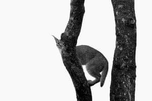 Veolia: Veolia Environnement Wildlife Photographer of the Year