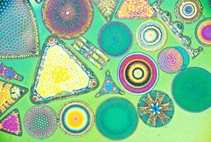 Bike blog: Diatom frustules, polarising microscope