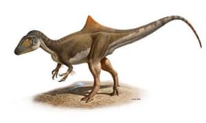 Concavenator corcovatus humpback dinosaur