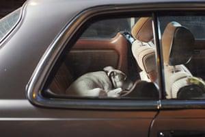 Martin Usborne: Mute: Bones the Staffordshire terrier