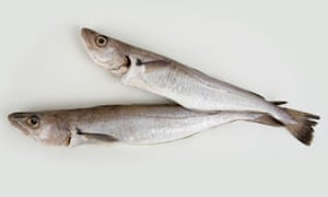 """Two whiting fishes"""