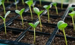 Alys Fowler: Seedlings