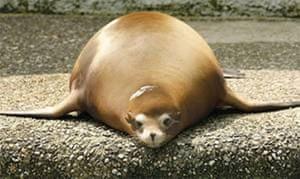 Week in pics: Franco: Fat seal
