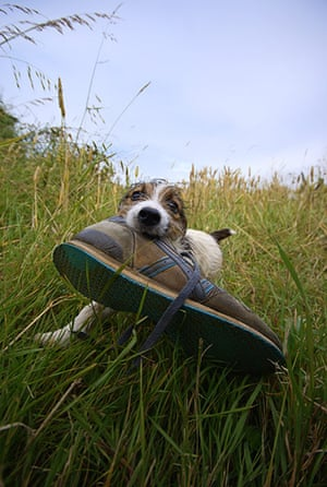 In pictures: Loss: Puppy with shoe