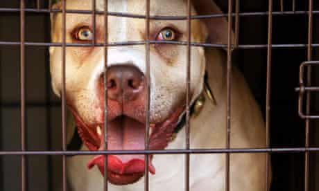 Police raids on dangerous dogs