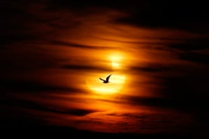 eclipse: A seagull against partial solar eclipse on Guadalmar beach in Malaga