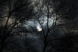 eclipse: artial eclipse through trees in Sofia