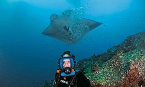 Manta ray and Hugh Fearnley-Whittingstall
