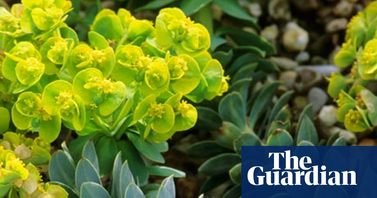 Gardens A Sense Of Euphorbia Life And Style The Guardian