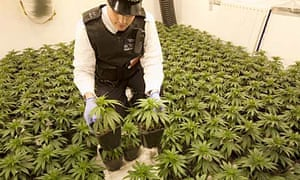 A police officer with the plants discovered in a raid on a cannabis factory in east London