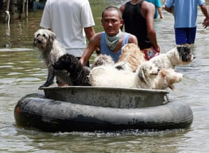 Thailand floods: A man transports dogs on a raft after floods in Ayutthaya