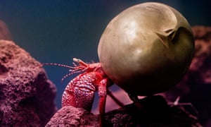 "Frieze Art Fair - Pierre Huyghe's ""Recollection"", a Giant Hermit Crab"