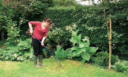 Gardens: Lawns