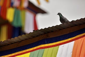 Bhutan royal wedding: a pigeon on the colourful rooftop of the main courtyard in Punakha