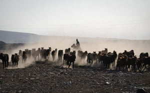 24 Hours: Herdsmen ride on horses as they direct a herd of horses in Gongliu