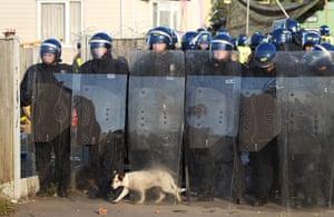 Dale Farm camp: A traveller's dog walks between police riot sheilds, Dale Farm