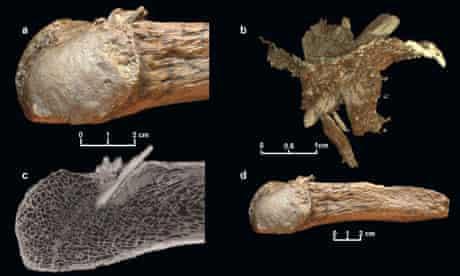 Mastodon rib with embedded spear tip