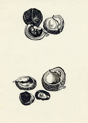 Sylvia Plath sketches: Conkers