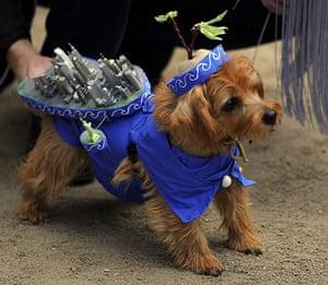Halloween dogs : Halloween dogs