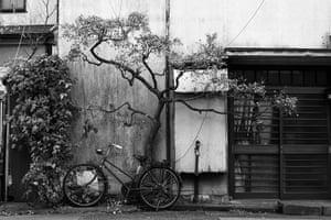 Tokyo by Paul Church: cherry blossom tree