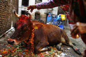 Diwali festival of lights: A Nepalese Hindu devotee performs rituals during the Tihar festival