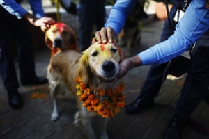 Diwali festival of lights: Nepalese policemen garland and apply vermilion on the heads of their dogs