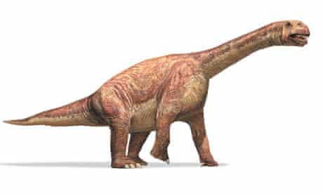 The sauropod dinosaur Camarasaurus