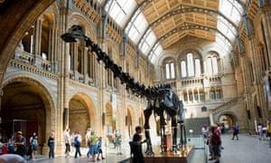Diplodocus skeleton in the Natural History Museum, London