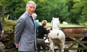Prince Charles visits a Duchy farm