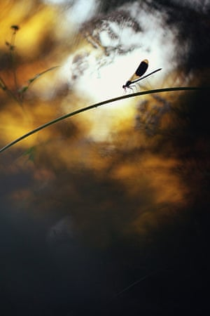 GDT: European Wildlife Photographer of the Year 2011