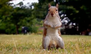 A squirrel with a nut in a comic moment from BBC2's The Great British Bake Off