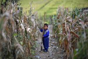 Famine in North Korea:  A North Korean boy holds a spade in a corn field