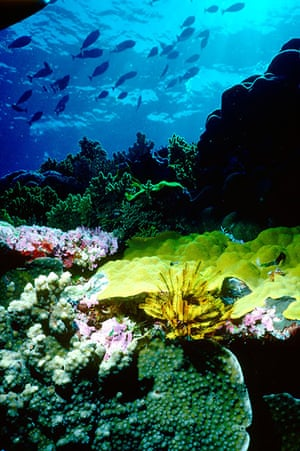 Seven wonders of nature: Coral on the Great Barrier Reef, Queensland, Australia