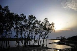 Seven wonders of nature: Mangrove trees in Sundarbans near Khulna