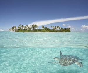 Seven wonders of nature: Hawksbill Turtle in sea off an island in the Maldives