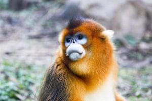 Week in iwildlife: China Zoo