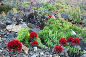 Week in iwildlife: Flowers bloom on the desert in the Llanos de Challe in Atacama desert