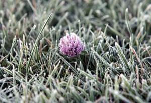 Week in iwildlife: A frozen clover flower