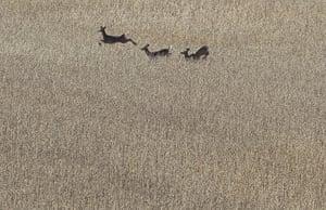Week in iwildlife: whitetail deer