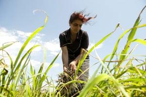 After the thaw: Azerbaijan: Onion farmer Rafiga Ahmedova, 48, harvests onions