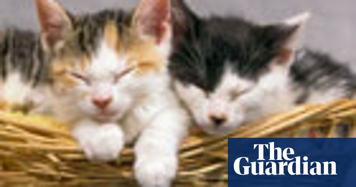 Our complicated relationship with cats | Pete Etchells