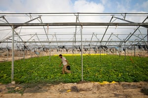 Interpal in Gaza: supporting farming