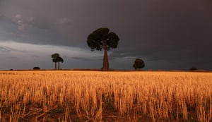 From the agencies: Freshly cut wheat stands under approaching storm clouds