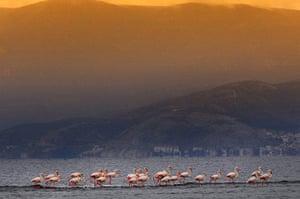 Week in wildlife: Flamingos Resting Place