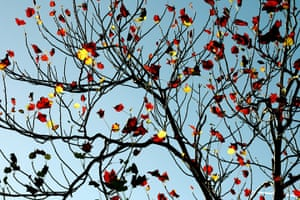 Green shoots : Readers photos on colours of autumn