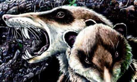 'Sabre-toothed squirrel'