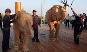 White elephants in Burma