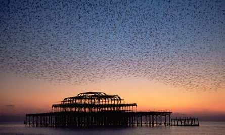 starlings flock above Brighton's derelict west pier